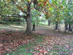Autumnal trees in a park